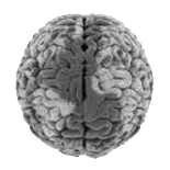 Inside Matthias Nott's Brain
